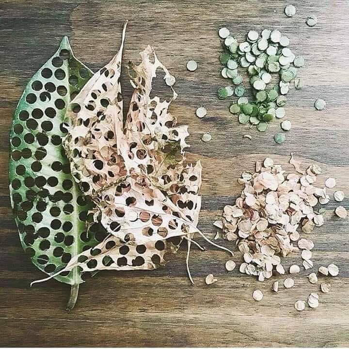 eco-confetti